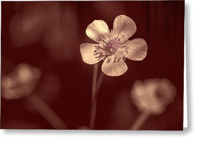 Rose Grain Wildflower Greeting Card by Bill Tiepelman