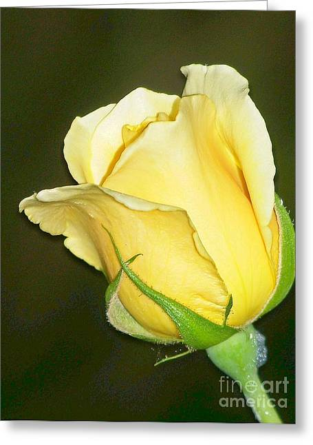 Rose Jaune Greeting Card by Sylvie Leandre