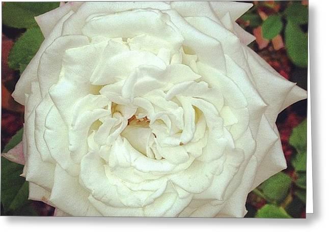 #rose Greeting Card