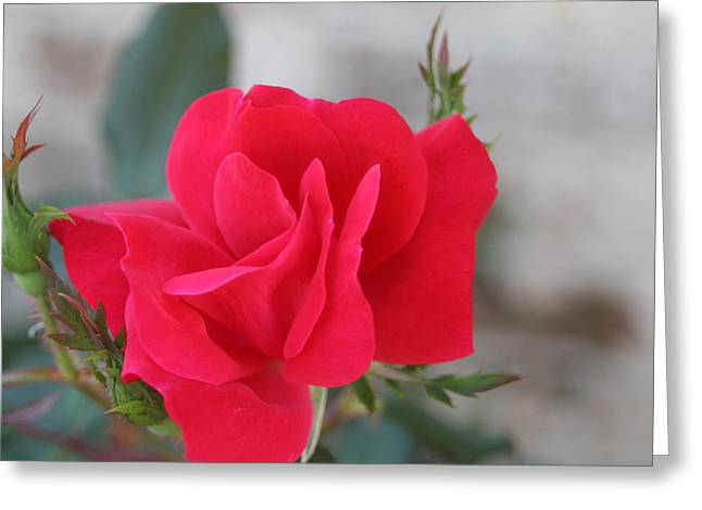 Rose Mount Greeting Card by Bret Worrell