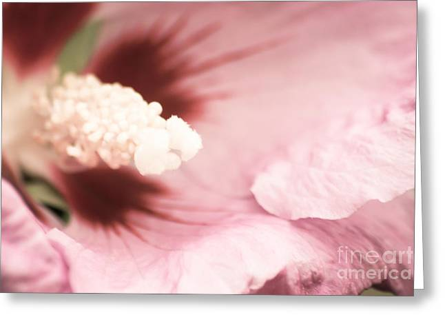 Rose Of Sharon Greeting Card by Hannes Cmarits