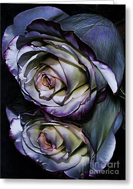 Rose Reflection 2 Greeting Card by Marianne Troia