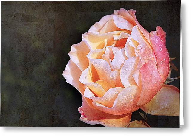 Rose With Dewdrops Greeting Card