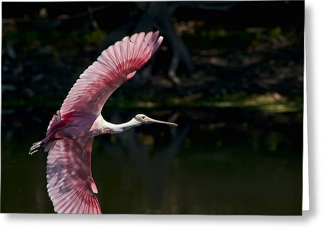 Greeting Card featuring the photograph Roseate Spoonbill by Steven Sparks