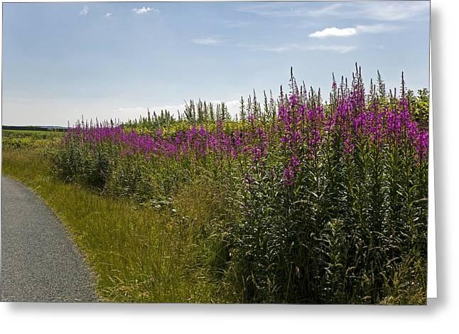 Rosebay Willowherb Flowers By Roadside Greeting Card