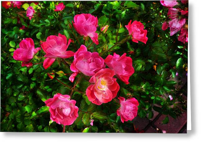 Roses Bush Greeting Card by Aleksandr Volkov