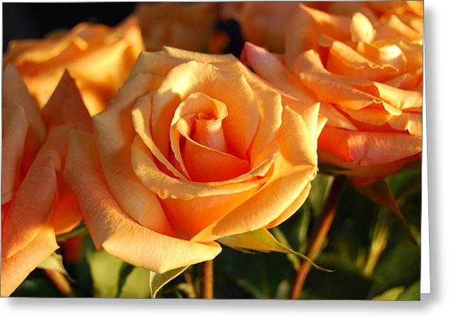 Roses For Me Greeting Card