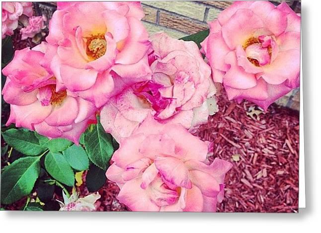 #roses Greeting Card