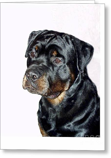 Rottweiler 1539 Greeting Card by Larry Matthews