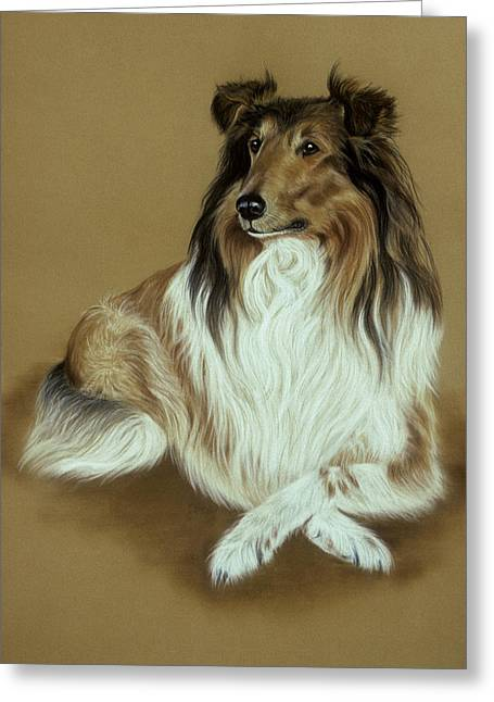 Rough Collie Greeting Card by Patricia Ivy