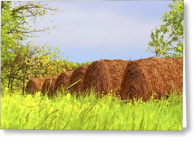 Round Bales Greeting Card by Tom Mc Nemar
