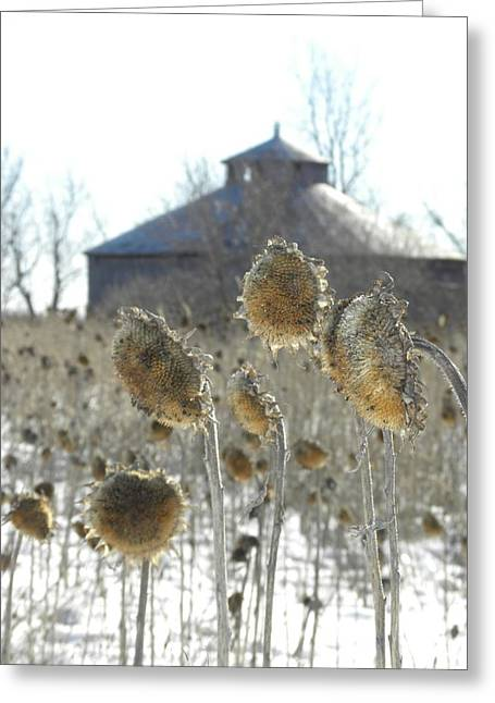 Round Barn With Sunflowers Greeting Card