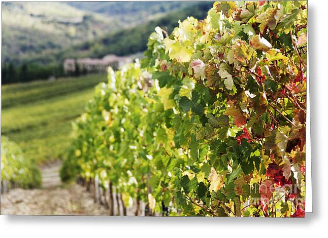 Row Of Grapevines In Vineyard Greeting Card by Jeremy Woodhouse