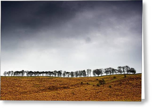 Row Of Trees In A Field, Yorkshire Greeting Card by John Short