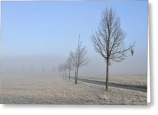 Row Of Trees In The Morning Greeting Card