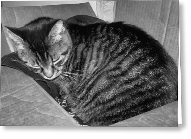 Rox In A Box Greeting Card by Juliana  Blessington