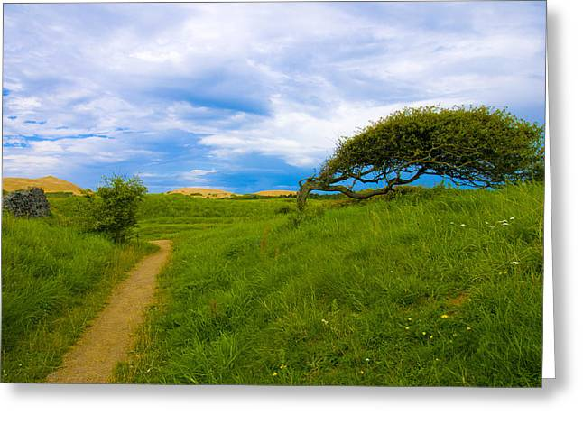 Rubjerg Path Greeting Card