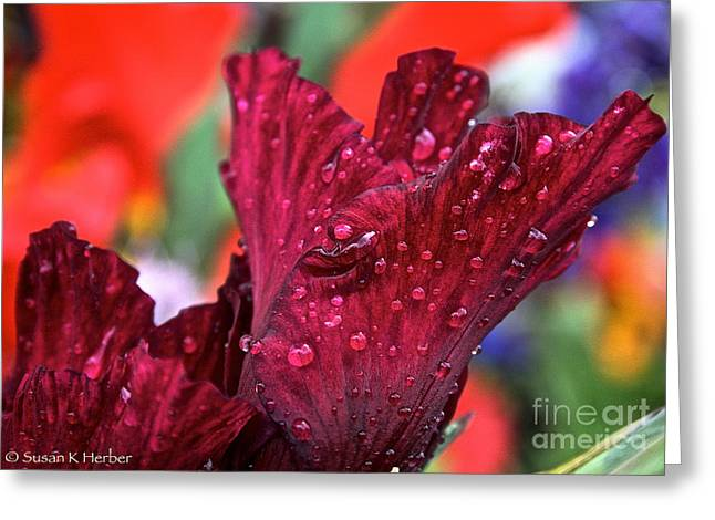 Ruby Jewels Greeting Card by Susan Herber