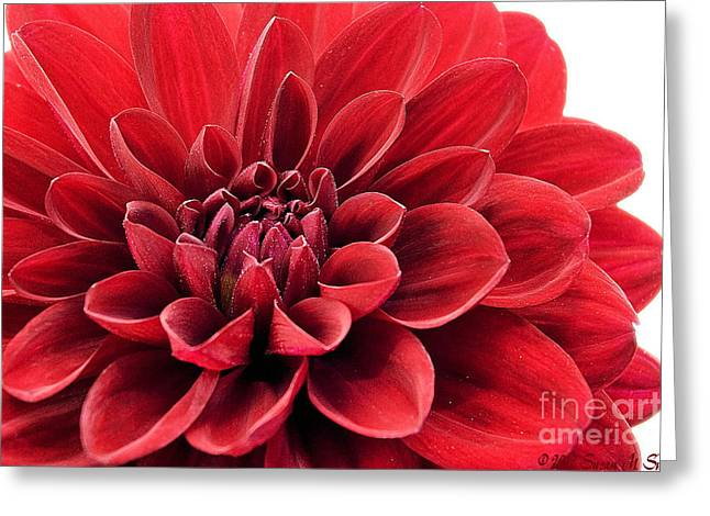 Ruby Red Greeting Card
