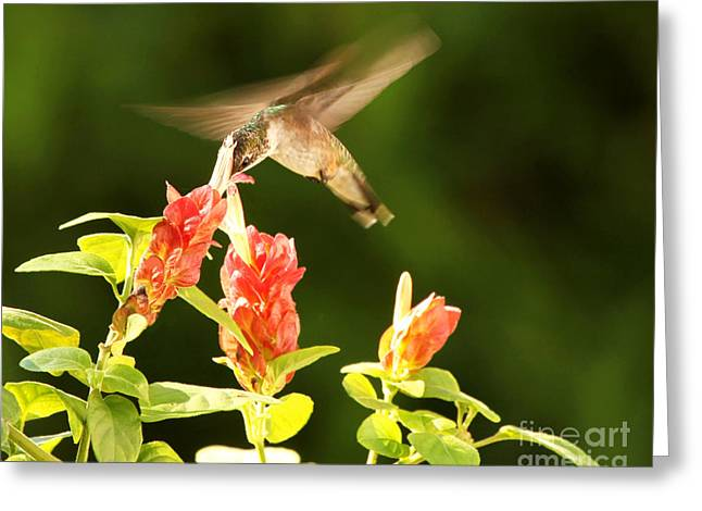 Greeting Card featuring the photograph Ruby Throat Hummingbird by Luana K Perez