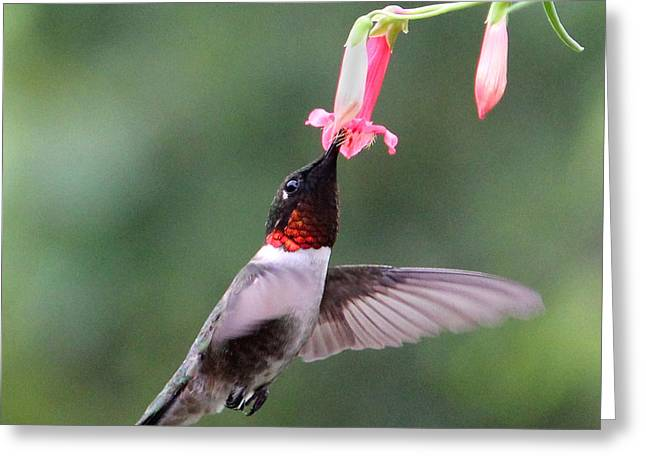 Ruby Throated Hummingbird1 Greeting Card