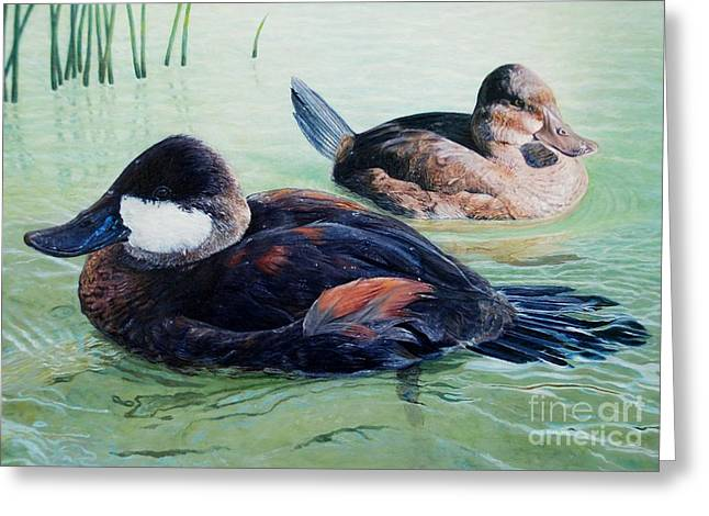 Ruddy Ducks Greeting Card by Don Evans