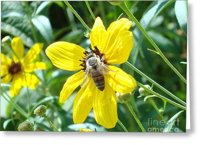 Rumble With A Bee Greeting Card by Tina McKay-Brown