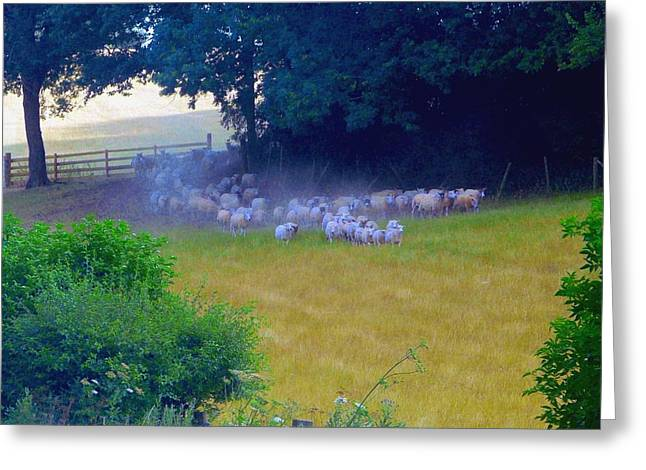 Running Of The Sheep Greeting Card