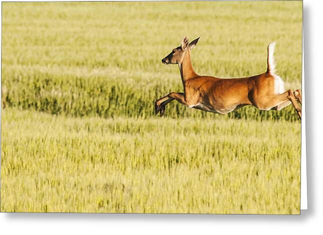 Running The Field Greeting Card by Don Durfee