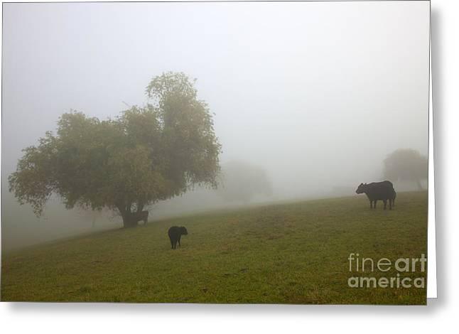 Rural Fog Greeting Card by Mike  Dawson