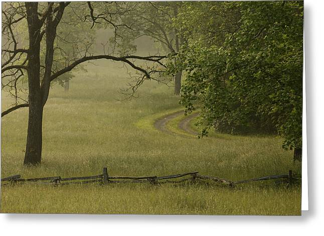 Rural Lane In Morning Fog Greeting Card