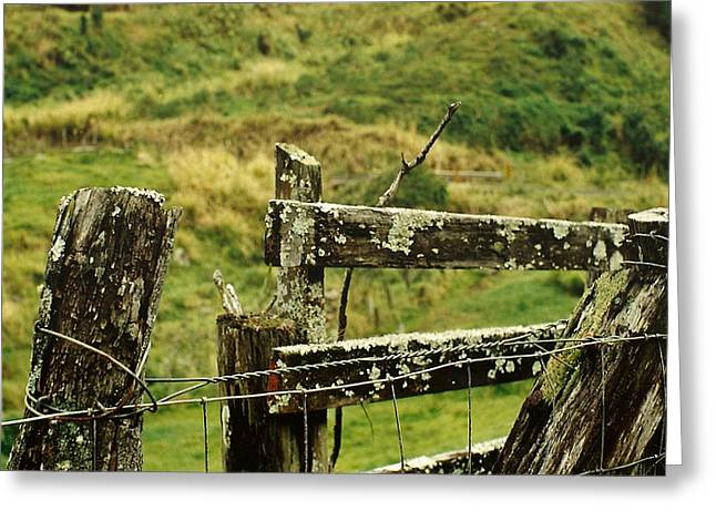 Rustic Fence Greeting Card by Marilyn Wilson