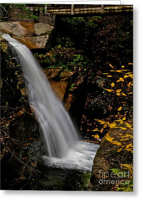 Sabbaday Falls In Nh Greeting Card by Scott Moore