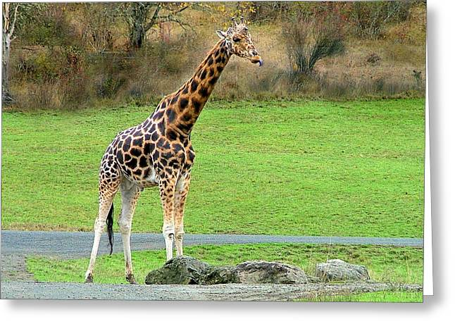 Safari Giraffe Greeting Card