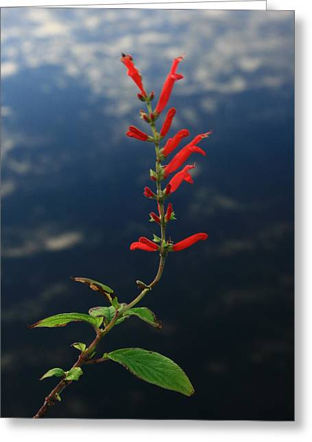 Sage Above Necanicum River Greeting Card by Steven A Bash