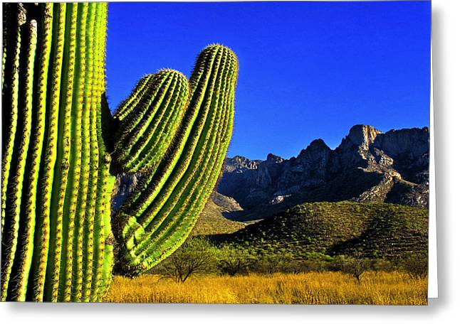 Saguaro And Catalina Mountains Greeting Card by Jim Moore