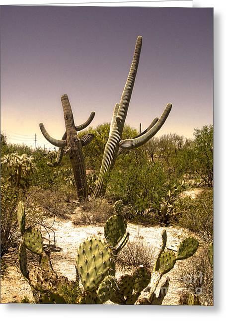 Saguaro Cactus Dance Greeting Card