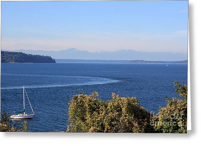 Sailing Greeting Card by Billie-Jo Miller