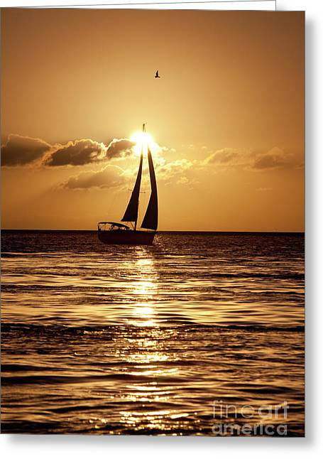Sailing In The Sun Greeting Card by Keith Kapple