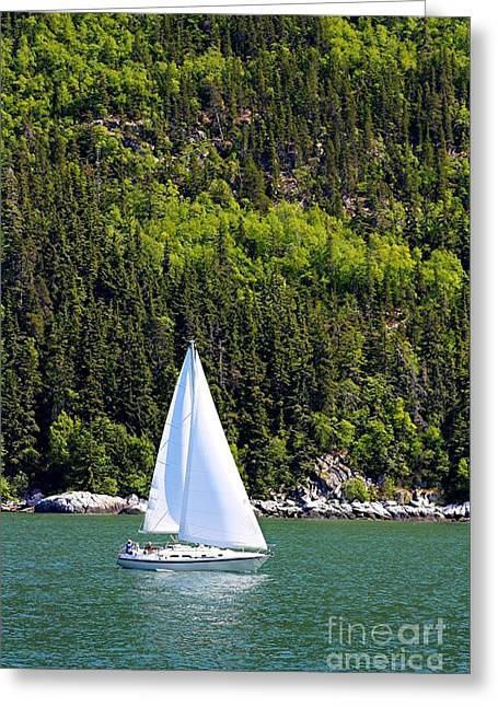 Greeting Card featuring the photograph Sailing The Wilderness by Laurinda Bowling