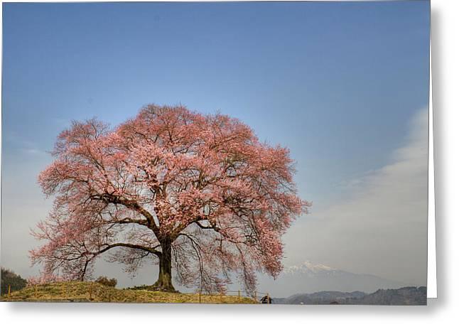 Sakura Sakura 2 Greeting Card by Tad Kanazaki