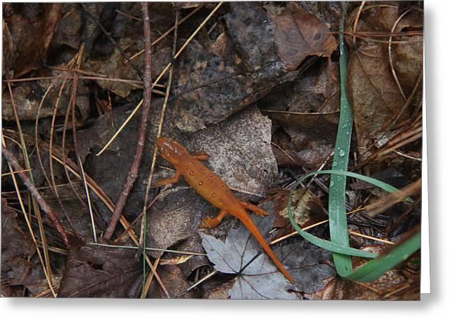 Salamander Greeting Card by Lali Partsvania