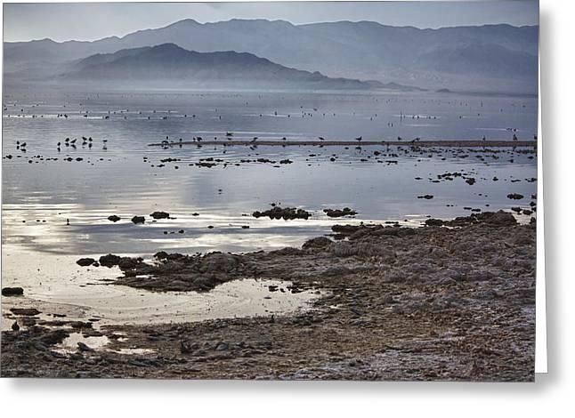 Salton Sea Birds Greeting Card
