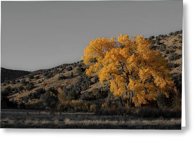 Greeting Card featuring the photograph Salto's Tree by Atom Crawford