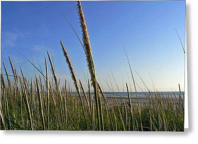 Greeting Card featuring the photograph Sand Dune Grasses by Pamela Patch