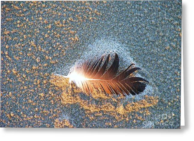 Greeting Card featuring the photograph Sand Sculptured Feather  by Michele Penner