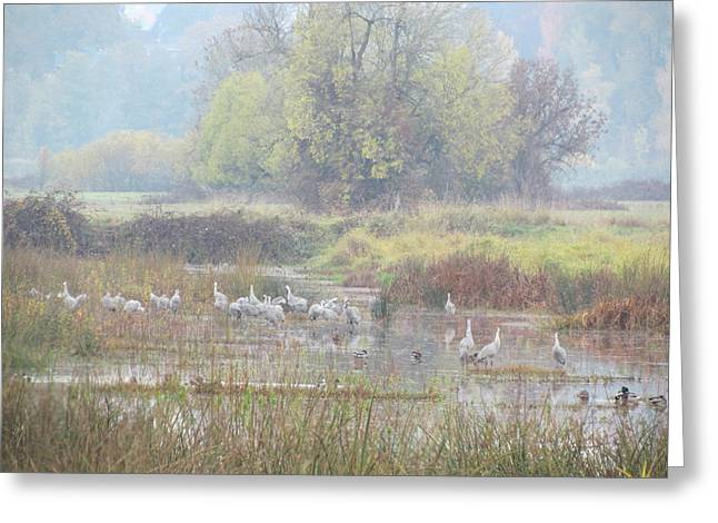 Sandhill Crane Paradise Greeting Card by Angie Vogel
