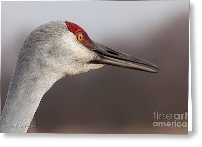Sandhill Crane  Portrait I Greeting Card by Beve Brown-Clark Photography