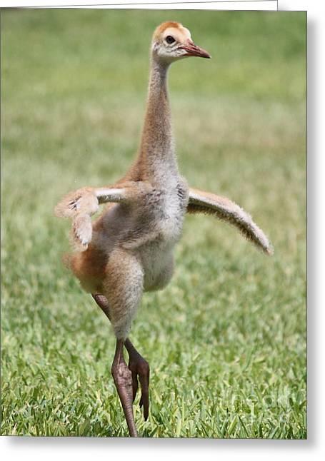 Sandhill Pirouette Greeting Card