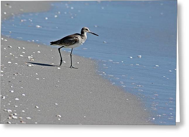Sandpiper 2 Greeting Card